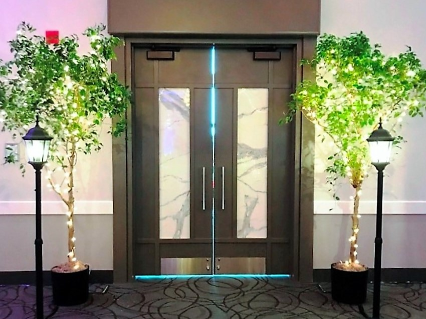 Ficus Trees & Street Lamps Entranceway