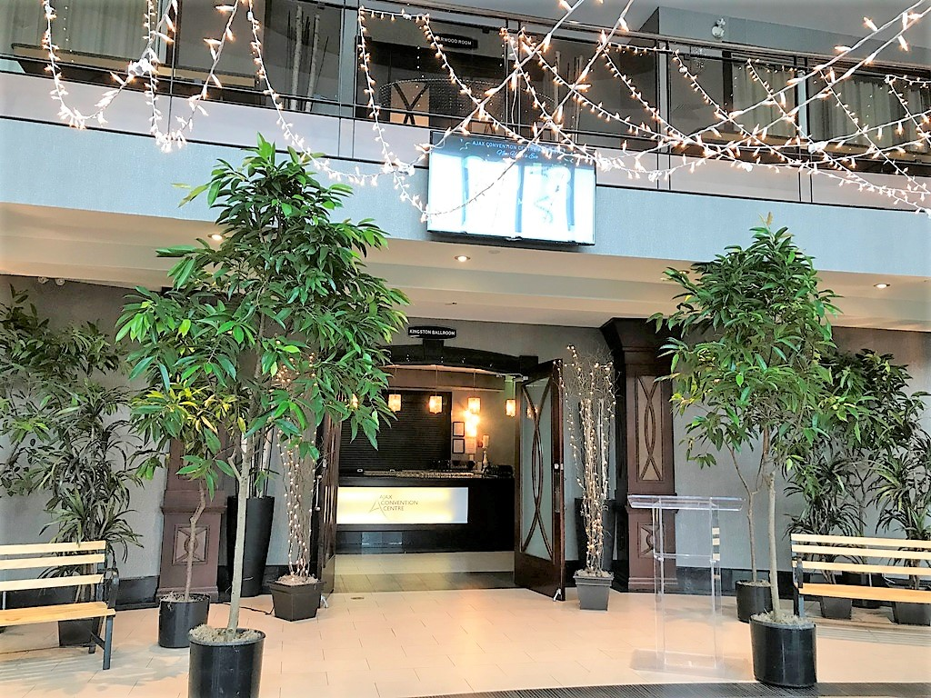 Starry Night Canopy & Ficus Trees with Fairy Lights Entranceway